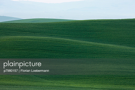 Field in Tuscany - p7980157 by Florian Loebermann