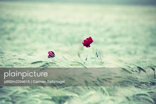 p992m2294615 by Carmen Spitznagel