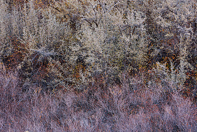 Shrubbery with autumn colours - p719m1511397 by Rudi Sebastian