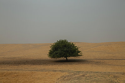 Single tree, Central Valley, California - p756m2211536 by Bénédicte Lassalle