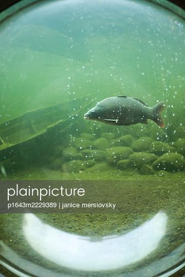 Einzelner Fisch durch ein rundes Fenster betrachtet - p1643m2229389 von janice mersiovsky