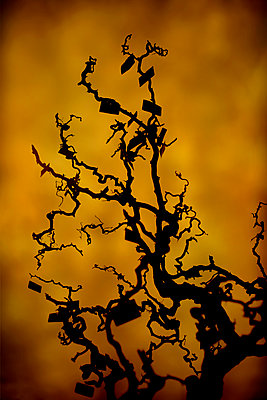 Creepy tree with hanging labels - p1028m2206125 by Jean Marmeisse