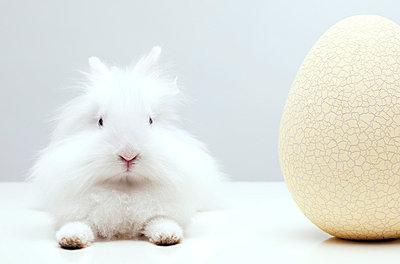 Kaninchen erschöpft vor großen Aufgaben - p8420065 von Renée Del Missier