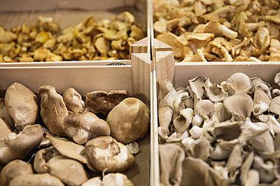 Pilze auf dem Markt - p600m2134865 von Laura Stevens