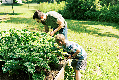 A father and son harvesting kale for dinner - p1166m2201478 by Cavan Images