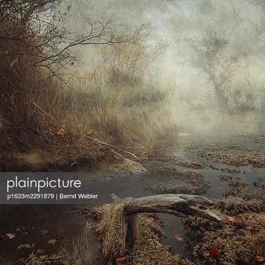 Hiding in the Swamp (Part III) - p1633m2291879 by Bernd Webler