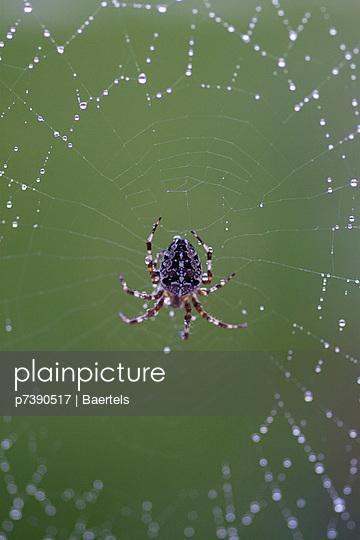 Spinne - p7390517 von Baertels