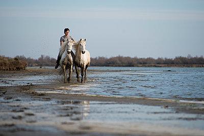 Horseback ride on the lakefront - p1041m1042370 by Franckaparis