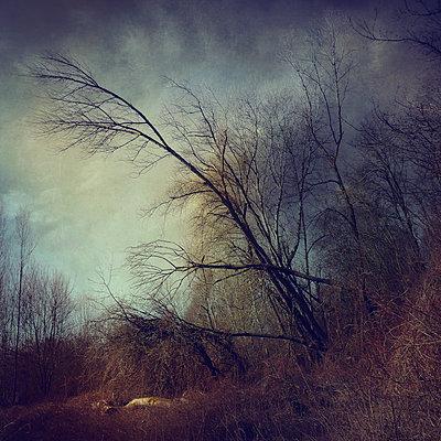 Miles from Nowhere - p1633m2220231 by Bernd Webler