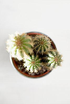 Cactus - p1149m1104707 by Yvonne Röder