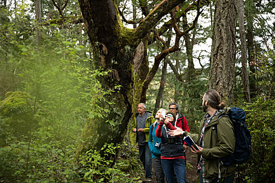 Trail guide leading active senior hikers in woods - p1192m2000422 by Hero Images