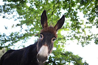 Donkey - p1631m2208595 by Raphaël Lorand