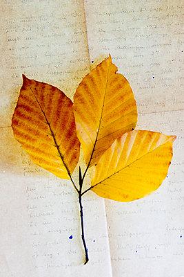 Herbstlaub auf altem Brief - p451m1191066 von Anja Weber-Decker
