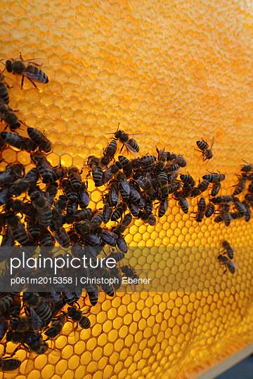 Bienenvolk auf Honigwabe, Sammlerbienen und Wächterbienen - p061m2015358 von Christoph Ebener