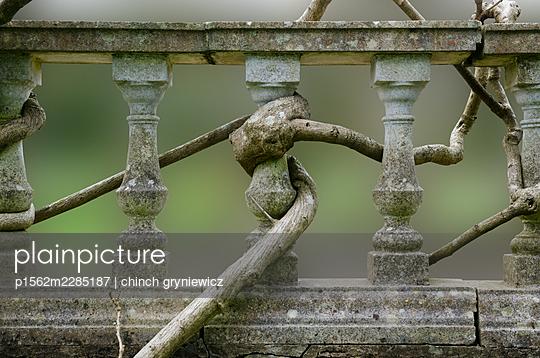 Wisteria on a balustrade - p1562m2285187 by chinch gryniewicz