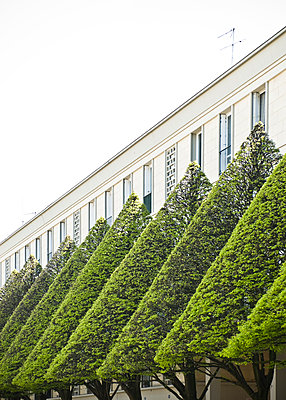 Hausfassade mit Bäumen in Le Havre - p982m1143412 von Thomas Herrmann