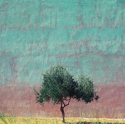 Einzelner Baum vor einer farbigen Mauer - p1542m2142319 von Roger Grasas