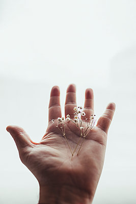 Hand with white dried flowers. Hope and positivity concept. - p1166m2247085 by Cavan Images