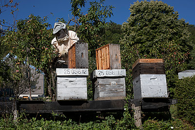 Beekeeper at work - p445m1496611 by Marie Docher