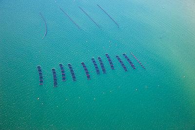 Mussel farming - p1120m899977 by Siebe Swart
