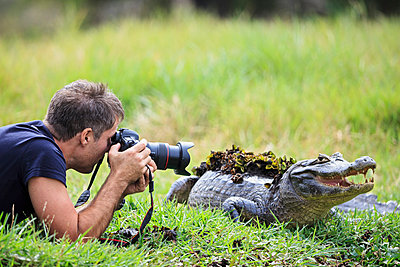 South America, Brasilia, Mato Grosso do Sul, Pantanal, Photographer and a Yacare caiman, Caiman yacare - p300m926453f by Fotofeeling