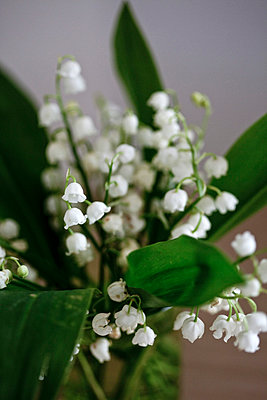 Frühlingsbote - p4450747 von Marie Docher