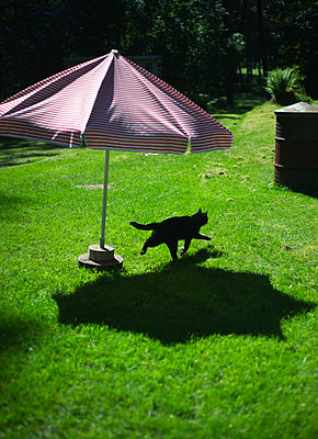 A Black Cat Running Under The Parasol In The Garden  - p847m1529606 by Ulf Lundin