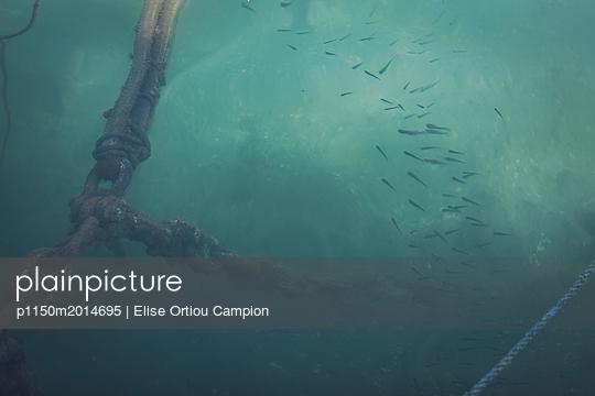 Fischschwarm - p1150m2014695 von Elise Ortiou Campion