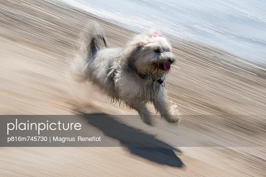 p816m745730 von Magnus Reneflot