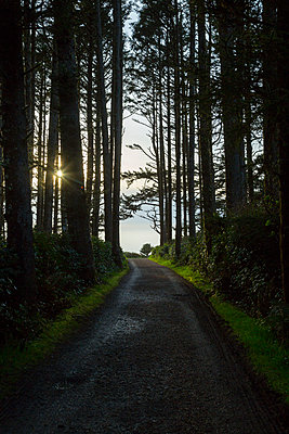 USA, Oregon, path in forest - p300m2219389 by Nadine Ginzel