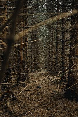 Coniferous forest - p1184m1424758 by brabanski