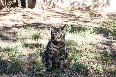 Grumpy Cat - p1291m1465557 by Marcus Bastel