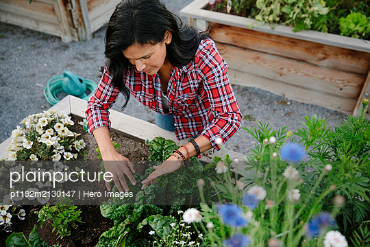 Woman tending to plants and flowers in community garden - p1192m2130147 by Hero Images