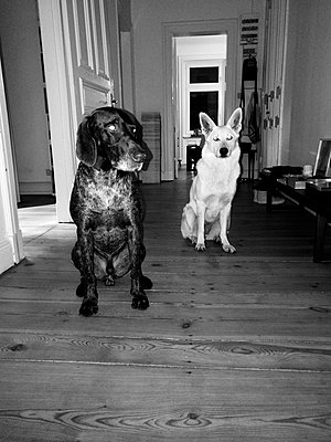 Zwei Hunde - p551m1582900 von Kai Peters