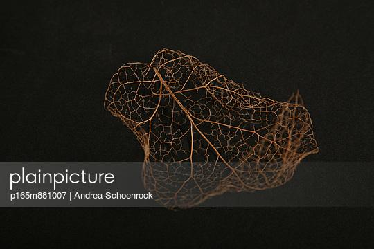 Blatt - p165m881007 von Andrea Schoenrock