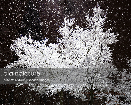 Freshly Falling Snow and an Illuminated Tree