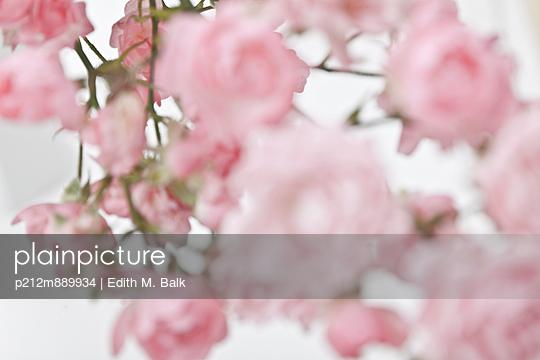 Rosa - p212m889934 von Edith M. Balk