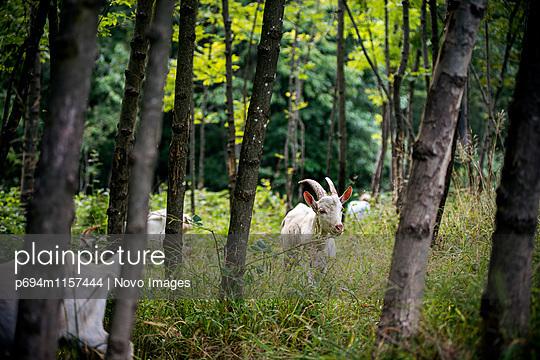 p694m1157444 von Novo Images
