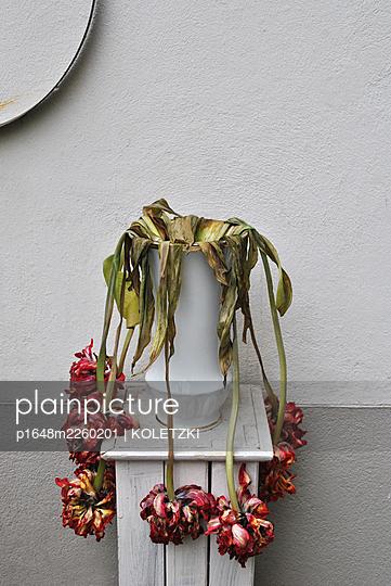 Verwelkte Blumen in einer Vase - p1648m2260201 von KOLETZKI