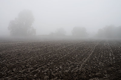 fog in november - p067m1087362 by Thomas Grimm