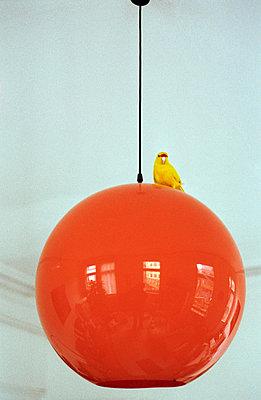 Sittich auf Kugellampe - p1260190 von Combifix