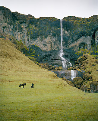 Horses in a pasture against waterfall, Iceland - p1481m2210526 by Peo Olsson