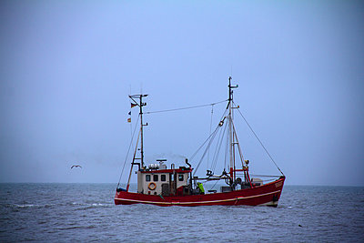 Shrimp boat - p851m2289585 by Lohfink