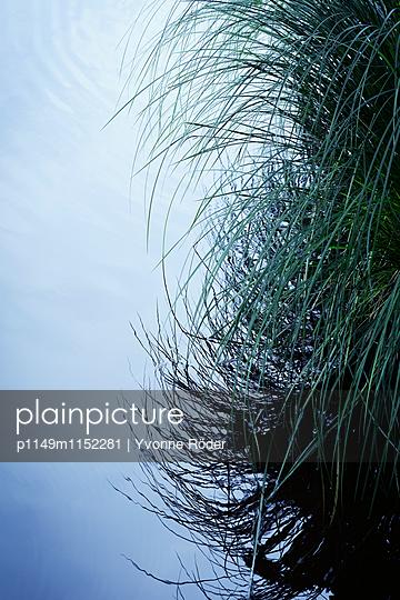Gräser am Seeufer - p1149m1152281 von Yvonne Röder