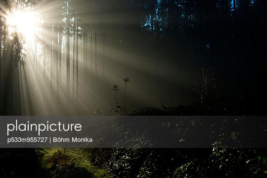 Sonnenstrahlen im Wald - p533m955727 von Böhm Monika