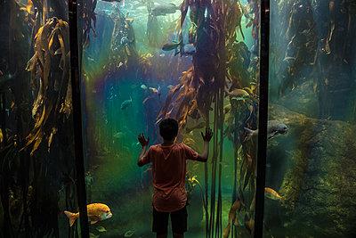 Junge in einem Ozeanium - p1082m2071335 von Daniel Allan