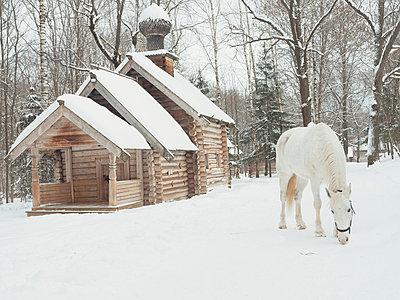 Schimmel im Schnee - p1476m2027026 von Yulia Artemyeva