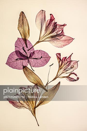Wilted flowers - p971m2020752 by Reilika Landen