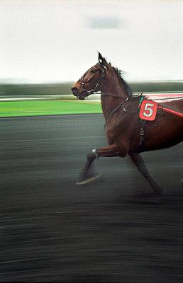 Pferderennen - p1028m767090 von Jean Marmeisse