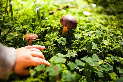 Pilze im Wald - p1386m1445759 von beesch